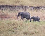 1087 - Elephant mother and calf