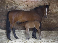 Elizabeths Mare and Foal 10x8_P6E0893-01