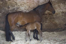 Elizabeths Mare and Foal_P6E0891-01
