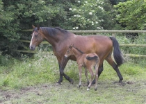 Mare and foal_P6E1162-01