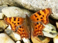 Comma warming up - 047