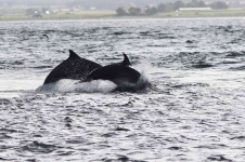 Dolphins jumping - 3566_p1