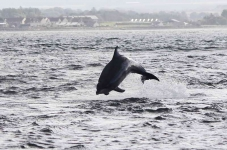 Dolphins jumping - 3585_p1