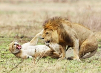 Lions coupling-4265