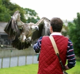 Chris with White Backed Vulture - 3096