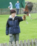 Falconry pupil with Harris Hawk - 1596