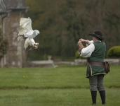 French Falconer and Snowy Owl - 1625