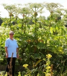 Giant Hogweed - Rosalind - 2659