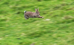 Rabbit escaping - 2865