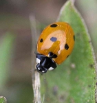 Ladybird-photographers reflection - 4497