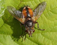 Techino fera Fly - 0007
