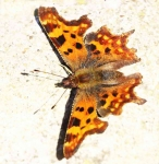 comma-warming-up-2029